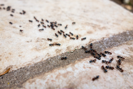 a lot of ants traveling in a row on the pavement