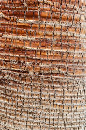 close up shot of an intricated palm tee bark photo