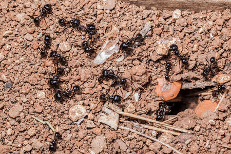 macro shot of some ants working together photo