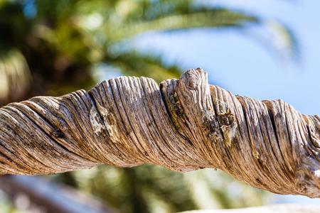 dettaglio di un tronco d'albero molto contorto e intricato Archivio Fotografico