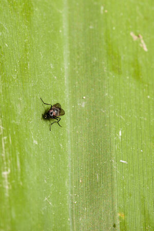 a small fly crawling on a green lush leaf