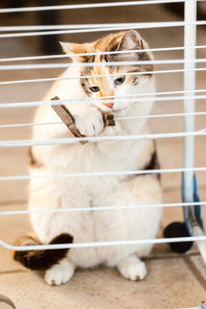 clothes peg: a lovely cat playing with a clothes peg outside Stock Photo