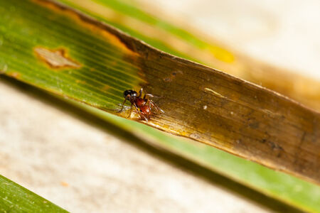 a small ant crawling on a green and brown leaf