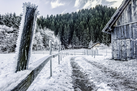 a frosty rural footpath with a wooden fence covered in hoarfrost and some cabins in the woods photo