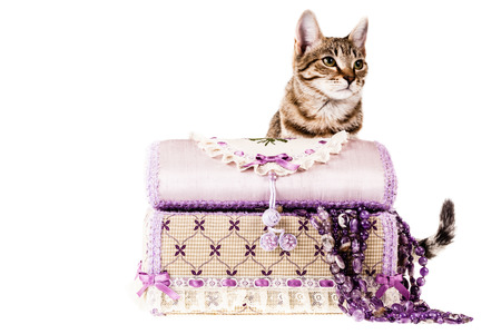a jewel box and a cute kitten isolated over a white background photo