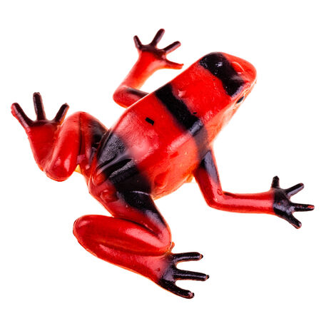 a plastic red frog toy isolated over a pure white  photo