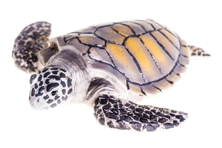 a plastic tortoise toy isolated over a pure white  photo