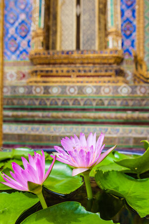 Lotus flowers in Wat Phra Kaew, Temple of the Emerald Buddha, Bangkok, Thailand.