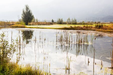 bullrush: a tranquil pond with bullrushes on a calm summer day