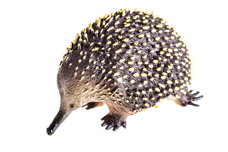 a small plastic echidna figurine isolated over a white background photo