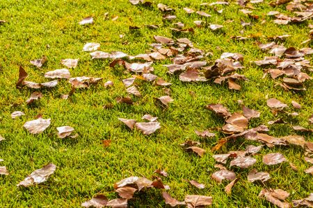 frostbitten: dead leaves on a beautiful lawn in a calm autumn day Stock Photo