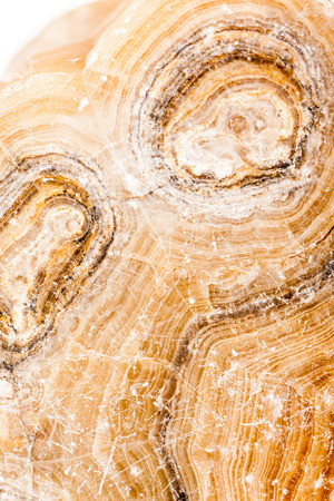 earthing: Ancient petrified wood, beautiful multicolored slice.
