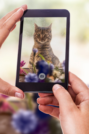 a woman using a smart phone to take a photo of a cute cat outside of a dirty window Banco de Imagens