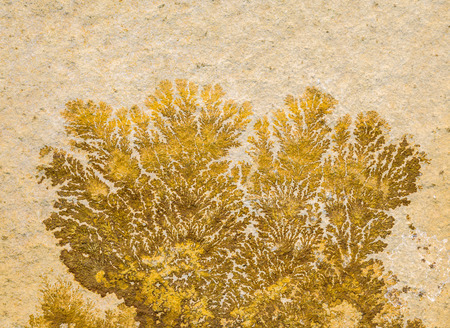 dendrites: macro shot of an ancient fossilized plant or dendrites Stock Photo