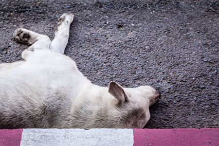 accident dead: a poor diseased thai stray dog dying on the side of the road maybe after being run over