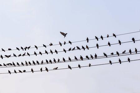 Viele Spatz Vogel Auf Einem Elektrischen Kabel. Tauben Auf Einem ...