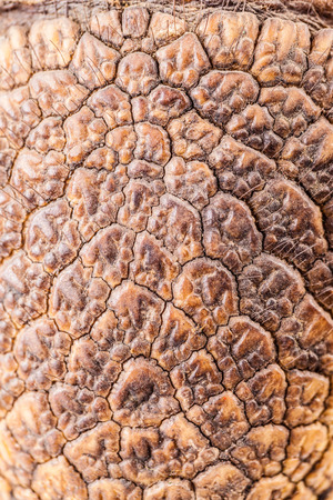armoured: macro shot of the armoured skin of an armadillo