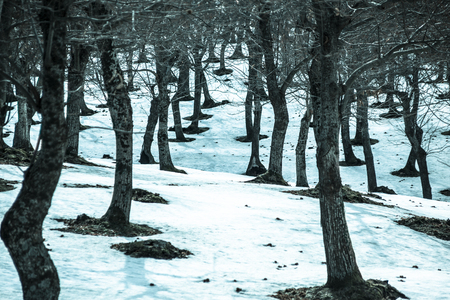 a lot of tree trunks in a snow covered countryside Banco de Imagens