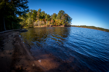 wide  wet: View of a large lake with dense forest in the background from the shaded shoreline