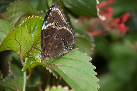 View of Brown butterfly with pink flower next to it 版權商用圖片