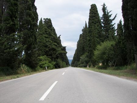 The Cypress tree boulevard to Bolgheri Town in central Italy Tuscany Stock Photo - 3185401