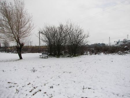Snow in the park photo
