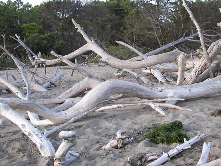 The sea sculptor on logs drifting