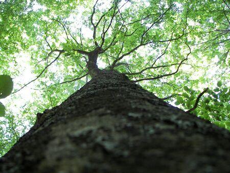 underbrush: green trunk Stock Photo