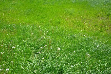 rurale: Prato verde Stock Photo
