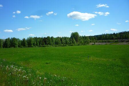 Prato verde e cielo