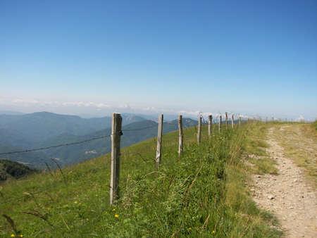 Alpine meadow Stock Photo - 8095215