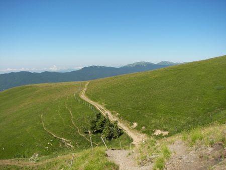 Alpine meadow Stock Photo - 8095210