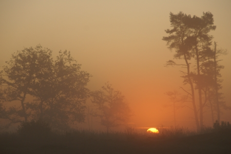 scenical: sunrise at the Loonse en Drunense Duinen  Noord-Brabant, Holland , with the silhouettes of trees Stock Photo