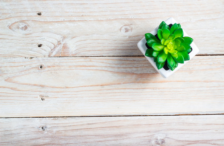 Succulent in pot wooden table background with copy space