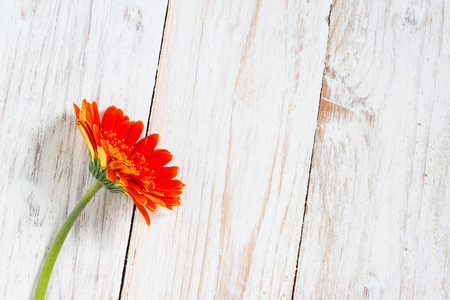 orange colorful gerbera flowers on the wooden table