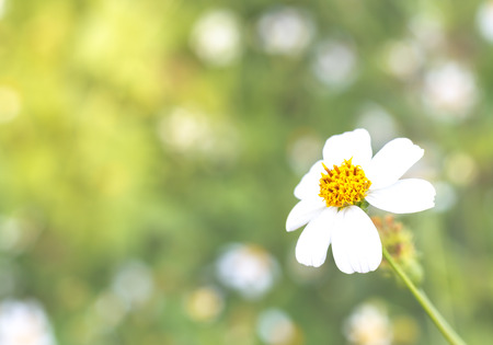 Close-up Flower with wild flowers and plants Background. 版權商用圖片