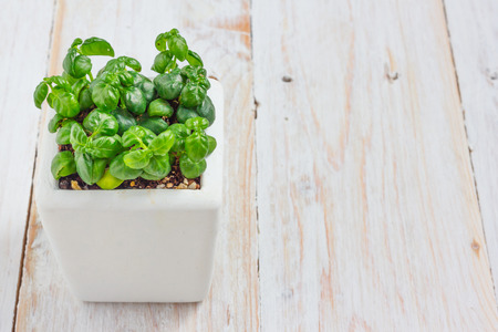 floral decoration: Small plant in pot on wooden table background with copy space.