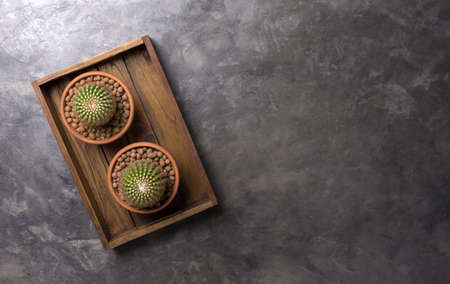 Succulent in pot in wooden box on gray concrete background. Copy space for text. Banque d'images
