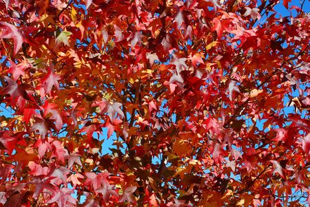 Autumn Background Stock Photo - 3127689
