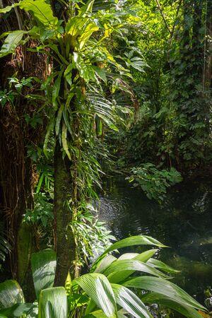 Pluie de forêt tropicale Banque d'images