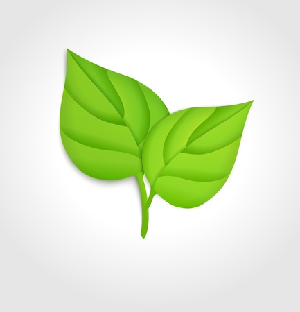 Green leaves  Vector concept Stock Vector - 21781968