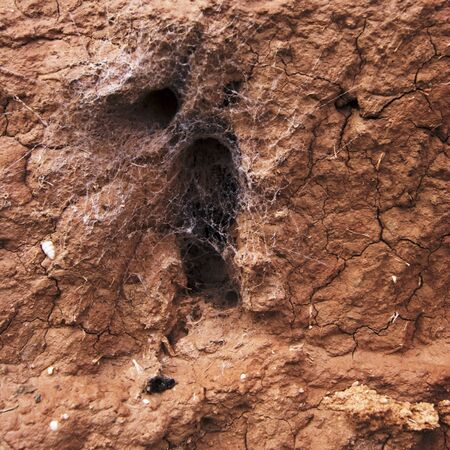 Adobe wall with spider nests photo