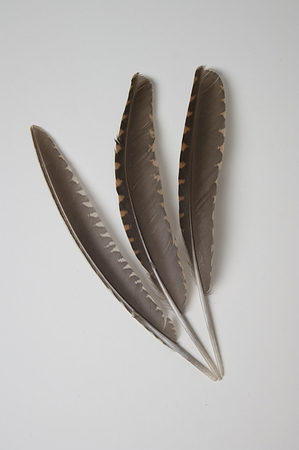 Composition with bird feathers.