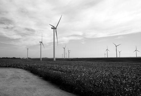 Modern windmills in a cotton field Windmills Black and white mills landscape, mills, cotton field  photo