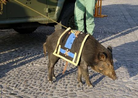 legionaries: A wildboar, mascot legionaries in southern Spain