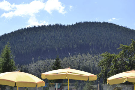 Yellow parasols in Schneeberg mountain - Lower Austria - Austria - Europe