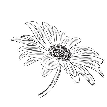 Fleur de marguerite contour dessiné main isolé sur fond blanc, format vectoriel