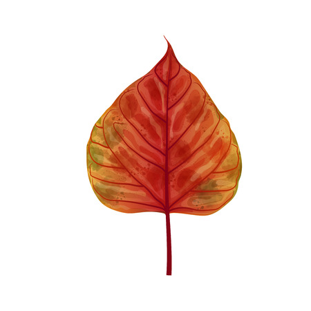 Hand drawn watercolor leaf isolated on white background, digital painting, vector