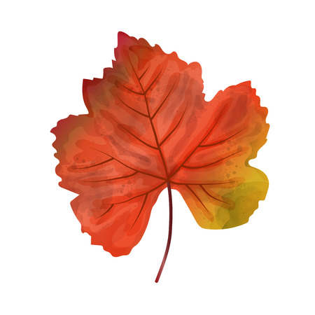 Hand drawn watercolor leaf isolated on white background, digital painting, vector Zdjęcie Seryjne - 114762047