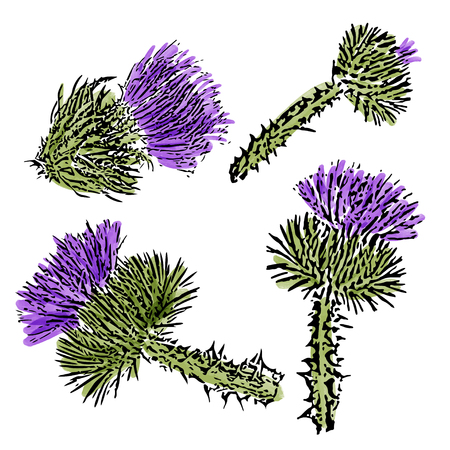 watercolor milk thistle  flowers set  isolated on white background, vector format Illustration
